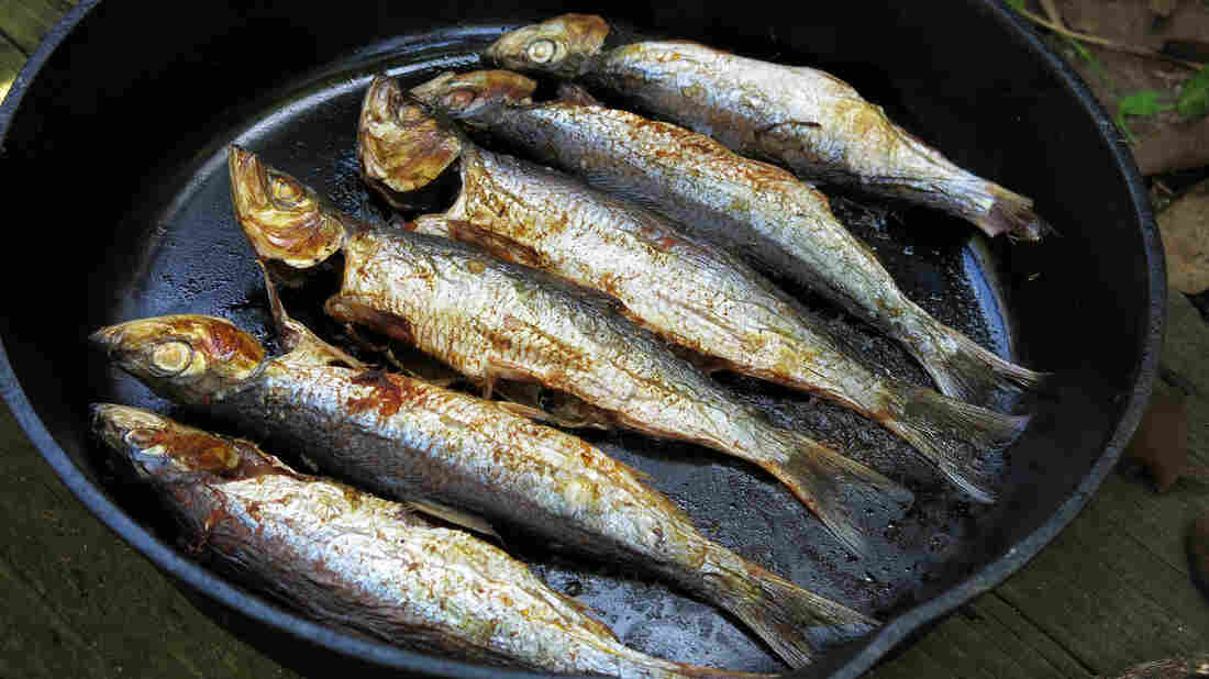 Herring headache the big obstacles to eating small fish for Healthiest fish to eat for weight loss
