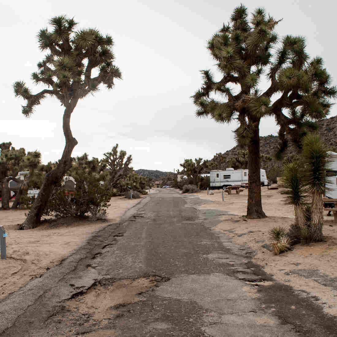 Flooding and the combined traffic of thousands of cars, trucks and RVs have torn up the roads at Joshua Tree National Park's Black Rock Canyon Campground. The majority of the park's $60 million maintenance backlog is for roads like this.