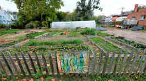 Big Muddy Farms, an urban farm in northern Omaha, Neb., is seen among residential homes last October. Urban farms have become a celebrated trend, yet earning a living at it is tough, a new survey finds.