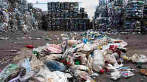 A Plastic-Eating Bacterium Might Help Deal With Waste One Day