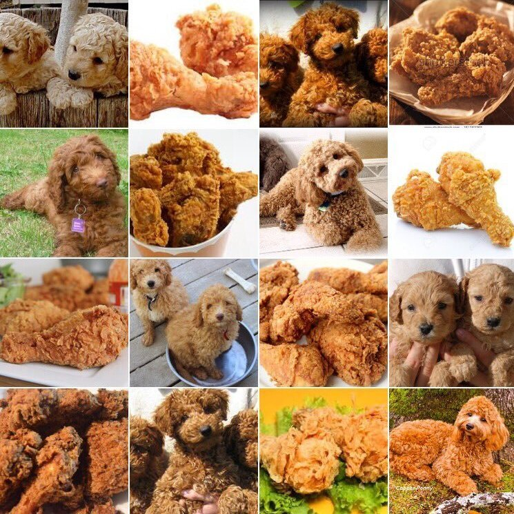 labradoodle or fried chicken_sq eb452372d63b9b3ea8350c2c970457e58cebd20f s900 c85 dogs are doggos an internet language built around love for the,One Has To Go Food Meme