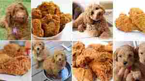 Canine Or Cuisine? This Photo Meme Is Fetching