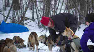 Snowmobiler Kills Dog Competing In Iditarod; Attack Apparently Intentional