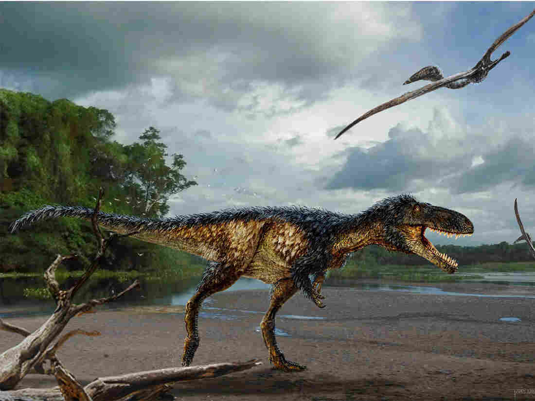 Horse-sized primitive tyrannosaur Timurlengia euotica from the middle Cretaceous (ca. 90 million to 92 million years ago) of Uzbekistan.