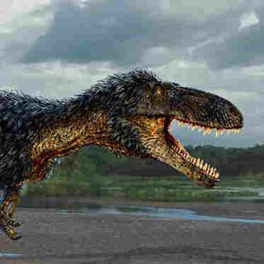 Horse-sized primitive tyrannosaur Timurlengia euotica from the middle Cretaceous (ca. 90 million to 92 million years ago) of Uzbekistan.