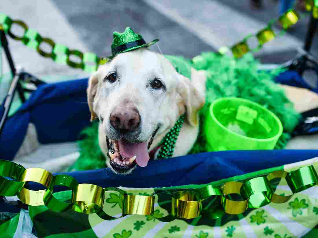 The St. Patrick's Day-themed set played by this dog on 6th Street, was, frankly, a disappointment.