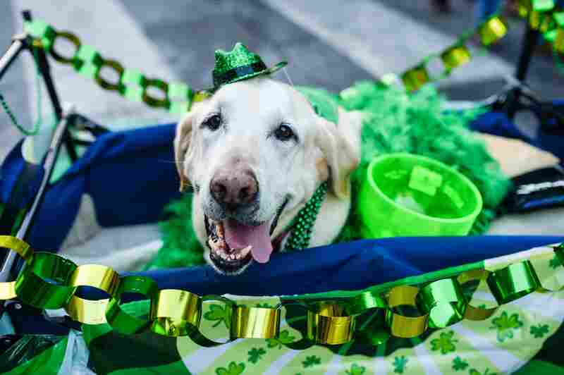 Oh, nothing, just a cute dog celebrating St. Patrick's Day on the streets of Austin.