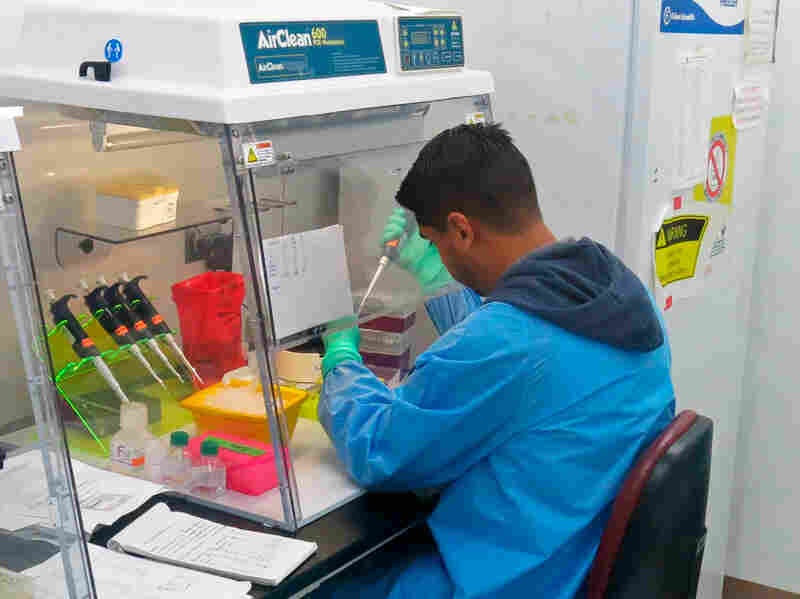 In this Feb. 24, 2016 photo, an employee with the U.S. Centers for Disease Control and Prevention (CDC) tests human blood samples for Zika at the CDC's dengue lab in San Juan, Puerto Rico. One of the CDC's main goals is to test every single pregnant woman in Puerto Rico for Zika and prevent people from contracting the virus.