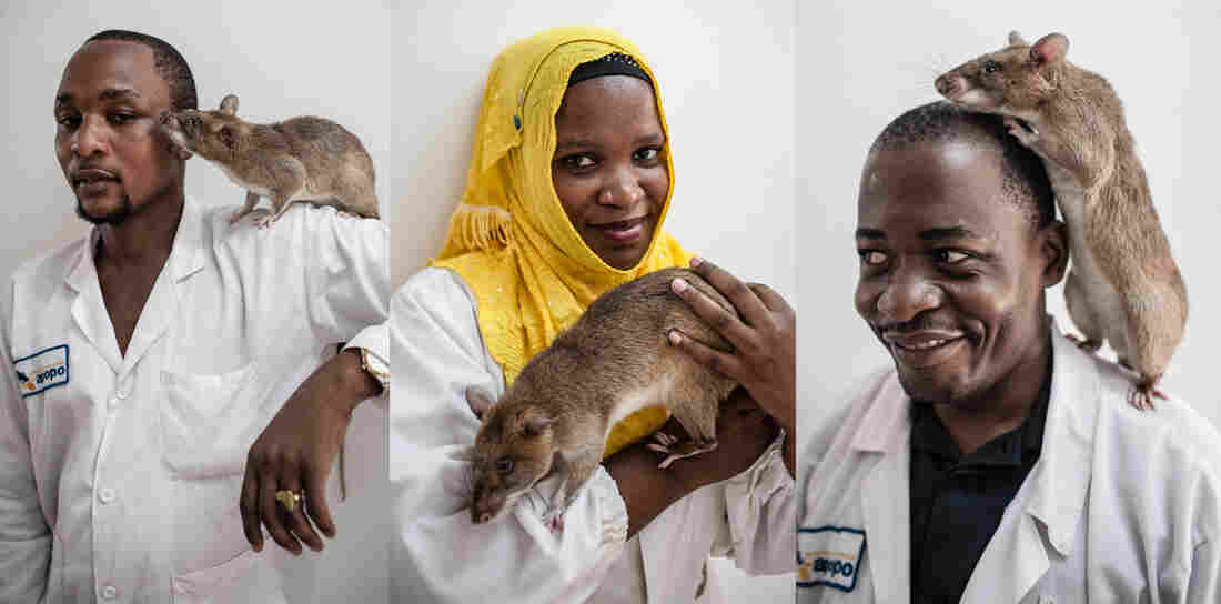 Who can identify TB faster: lab technicians for APOPO such as Karim Chang'a, Rehema Kondo, Eustachian Sezary, or a rat like Chewa? No contest — it's the rat.