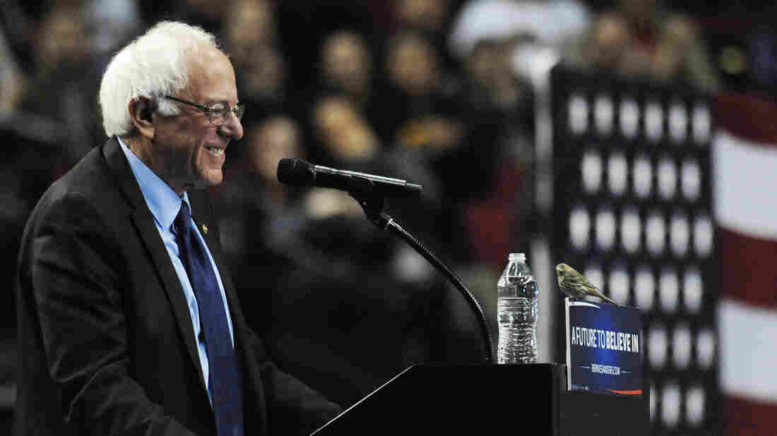 Democratic presidential candidate Bernie Sanders smiles as a bird lands on his podium when he addresses the crowd during a rally at the Moda Center in Portland, Ore., Friday.