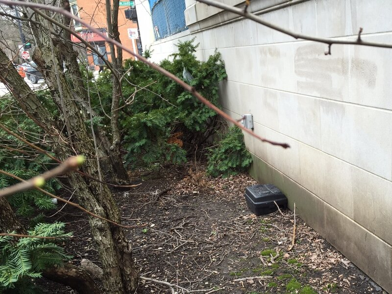 How Can I Get Rid Of Rats In My Backyard