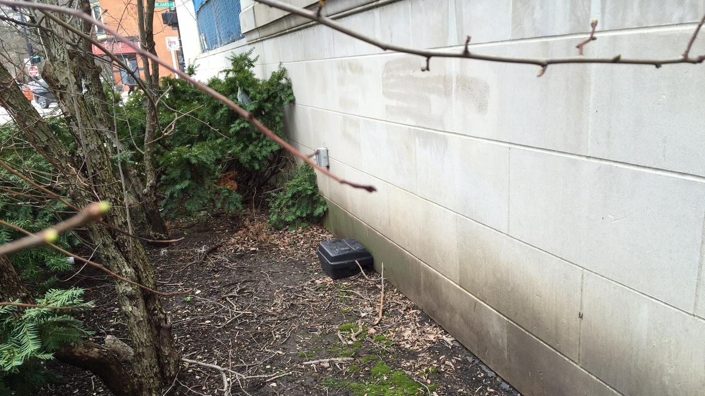 facing a growing rat problem a neighborhood sets off the cat