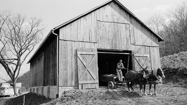 Wendell Berry, America's foremost farmer-philosopher, with horses on his farm. (Courtesy of Platform Media Group)