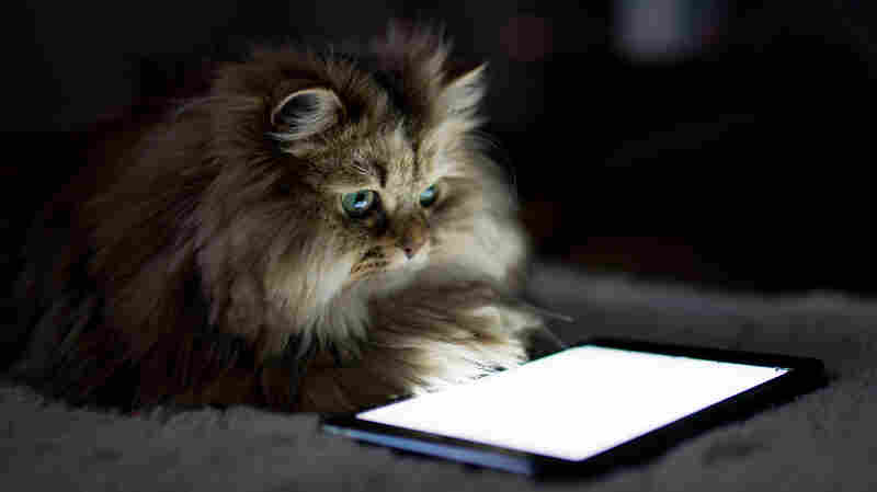 Pets are more tech savvy than you think.