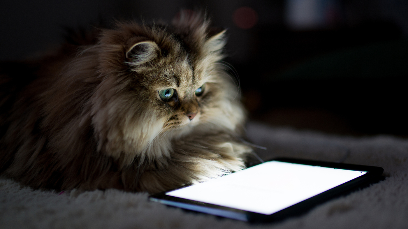 not so far fetched how cats and dogs can use gadgets you already