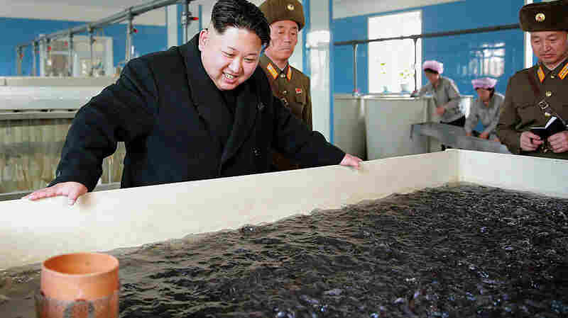 This undated picture released by North Korea's official Korean Central News Agency shows North Korean leader Kim Jong-Un (C) inspecting a catfish farm at an undisclosed location in North Korea.