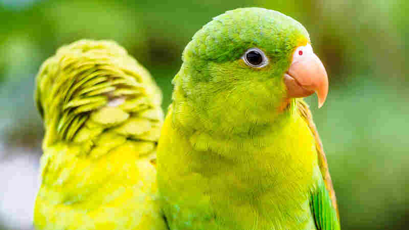 Parakeets are among Colombia's 1,900 bird species.