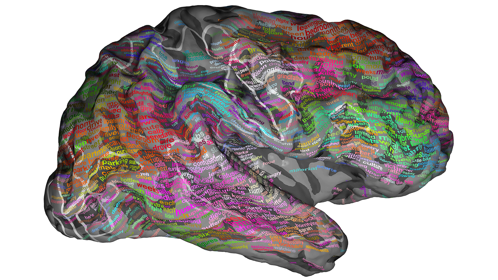 Scans Show 'Brain Dictionary' Groups Words By Meaning