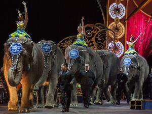 For the last time, elephants were used in a performance by Ringling Bros. and Barnum & Bailey Circus last night. The circus elephants are seen here during a show last month in Washington, D.C.