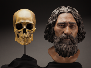 A reconstruction of Kennewick Man sculpted to resemble the Ainu people of Japan, considered by some at the time to be his closest living relatives. Now, a link to Native Americans has been confirmed.