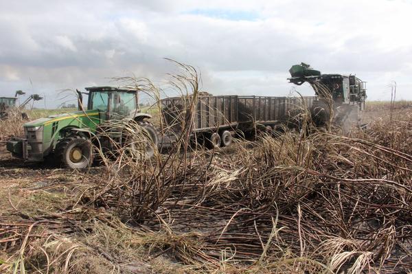 Harvesting sugar cane in Florida's Everglades Agricultural Area.