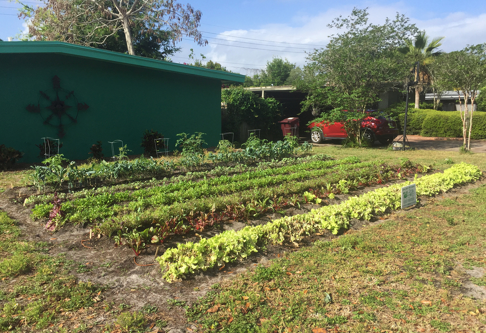 """Rows of greens grow on the front yard of Gary Henderson's house. He's one of a handful of homeowners in Orlando, Fla., who've given up their lawn to Fleet Farming. Once """"you realize that you can eat your lawn, I think it makes a whole lot of sense,"""" Henderson says. (Catherine Welch/WMFE)"""