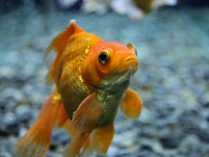 The first issue of Animal Sentience looks at the question of whether fish can feel pain.