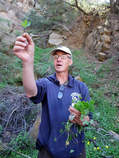 Pascal Baudar, seen on a foraging hike, is the author of The New Wildcrafted Cuisine.