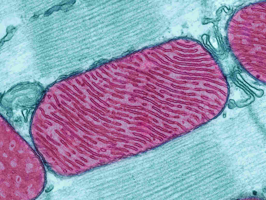 Scientists Find Microbe That Functions Without ...