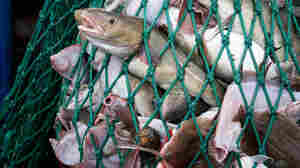 Fisheries Scientist Under Fire For Undisclosed Seafood Industry Funding