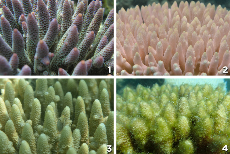 close-coral-numbers_custom-18d87f6132c407d2f3542d6ba7874434efd5cac4-s800-c85.jpg