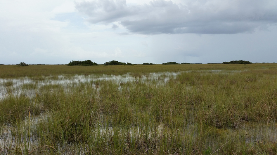 A view from the Shark Valley Visitors Center in Everglades National Park. Much of the freshwater that used to replenish South Florida's saw grass prairie has been diverted to agriculture, researchers say.