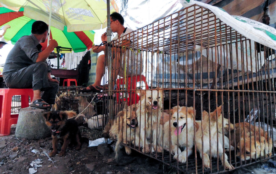 Image result for dog meat market