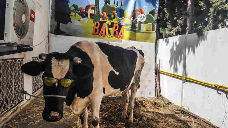 It Sounds Udderly Ridiculous, But Video Gamers In Tunisia Can Win A Cow