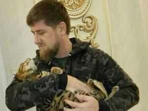 "Chechnya's leader Ramzan Kadyrov posted on Instagram that he has ""completely lost"" his cat."