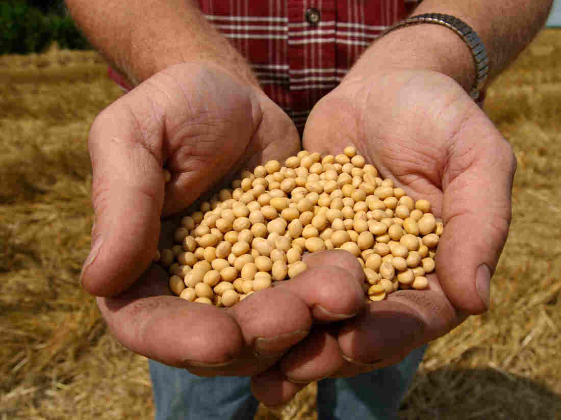 A farmer holding Monsanto's Roundup Ready Soy Bean seeds at his family farm in Bunceton, Mo. Monsanto has been both celebrated and reviled for its genetically altered seed business.