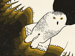 "A promo image for the Skunk Bear micro-doc, ""Secrets Of The Snowy Owls."""