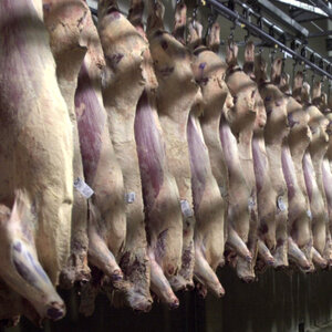We Don't Know How Many Workers Are Injured At Slaughterhouses. Here's Why
