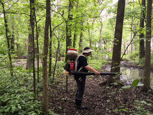 Maureen LoCascio, with the mosquito control team in Hudson County, N.J., uses a backpack sprayer to spread insecticide against mosquito larvae.