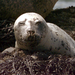 New England, Back Away From The Seal Pups
