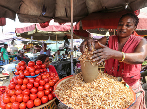 The price of tomatoes at Nigerian markets is going higher and higher as moths and their larvae wipe out much of the crop.