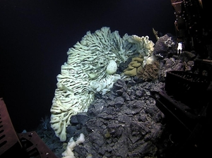 A sponge the size of a minivan, the largest on record, was found in summer 2015 during a deep-sea expedition in Papahānaumokuākea Marine National Monument off Hawaii.