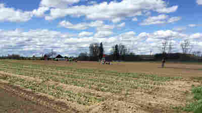 Kent Family Growers is located on a small parcel outside a college town in upstate New York. Farmers from California to North Carolina have complained of delays in the H-2A visa program for temporary agricultural jobs.