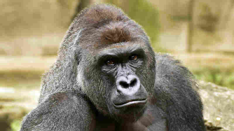 Animal Rights Group Calls For Federal Fines For Cincinnati Zoo