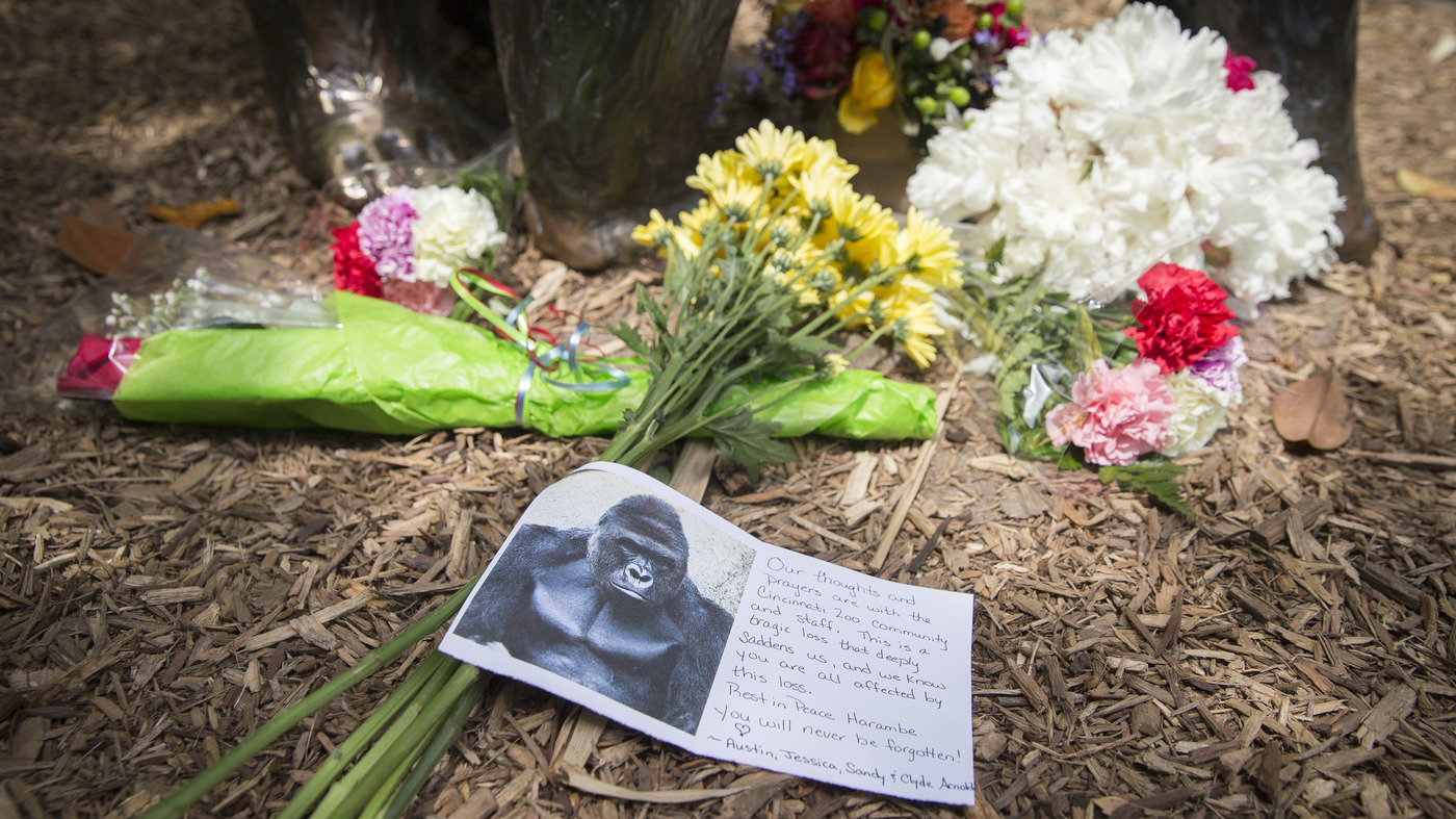 a gorilla is killed and our parent shaming culture springs to life