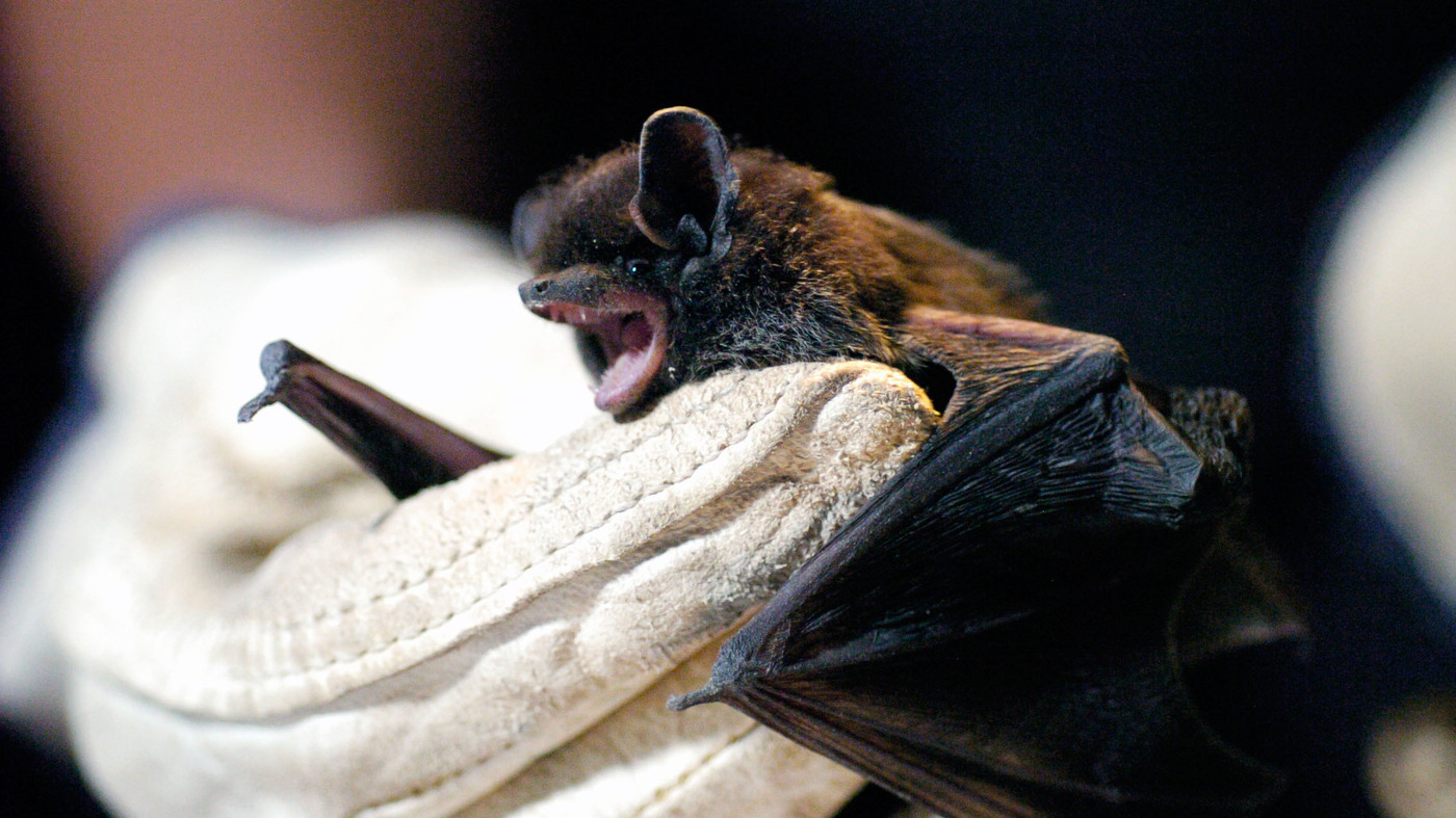 A Woman Dies Of Rabies After Waking Up To Find A Bat In
