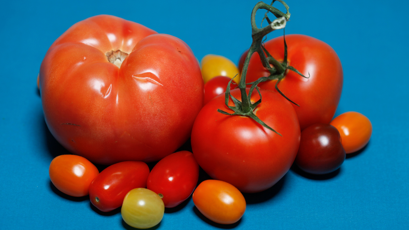 the search for tastier supermarket tomatoes a tale in 3 acts the