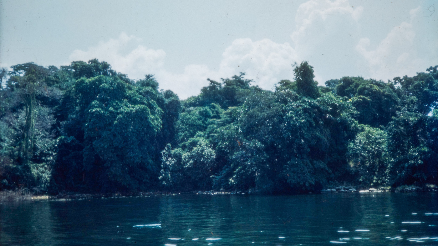 Which are the manmade forests in uganda?