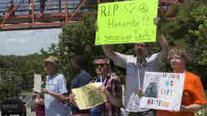 Zoo visitors look at protesters and mourners from a walk bridge during a vigil for the gorilla Harambe outside the Cincinnati Zoo & Botanical Garden.