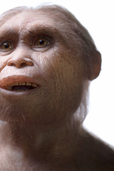 A reconstruction of Homo floresiensis by Atelier Elisabeth Daynes.
